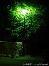 Cycle by night
